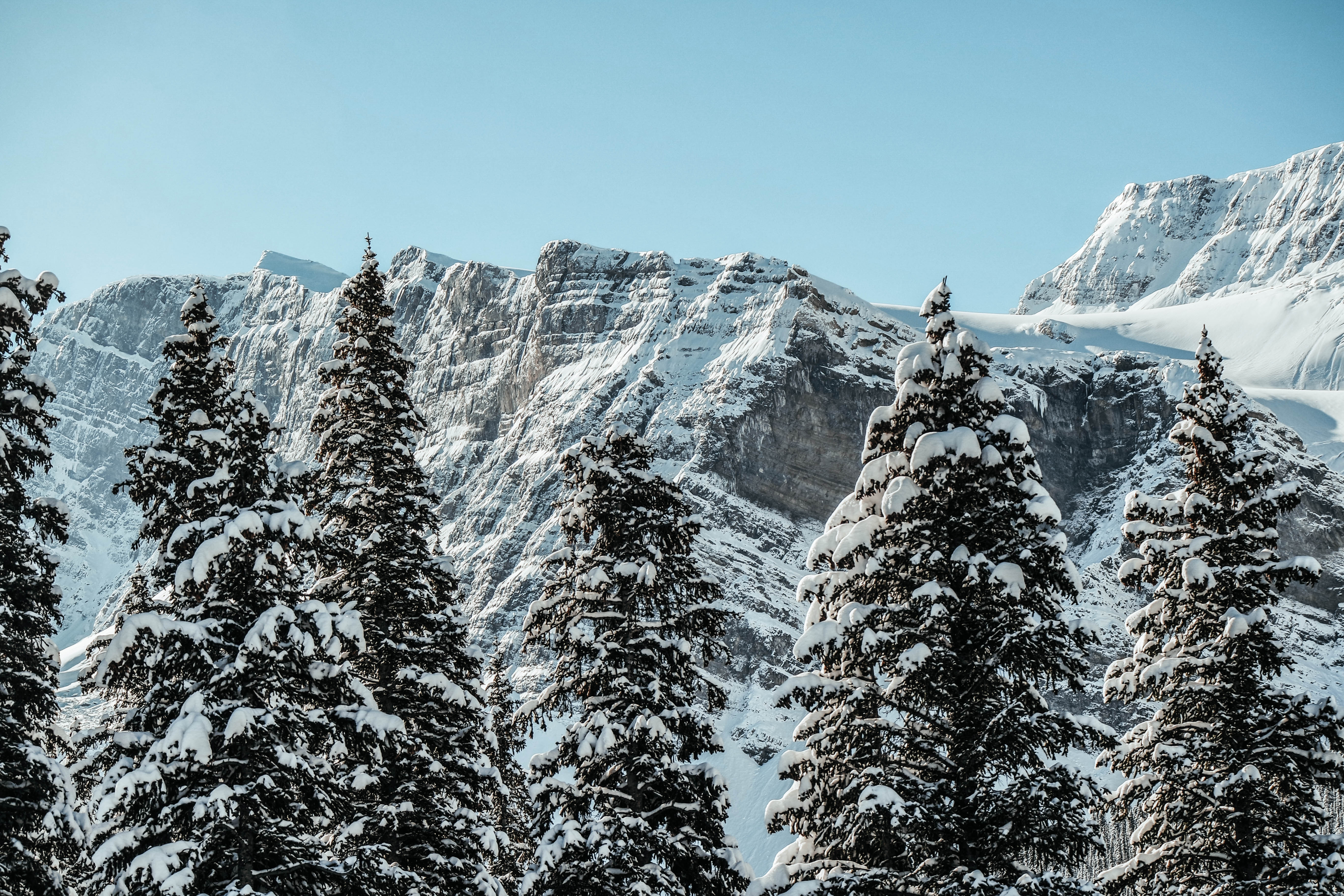 Snowy Mountain Tops, Icefield parkway