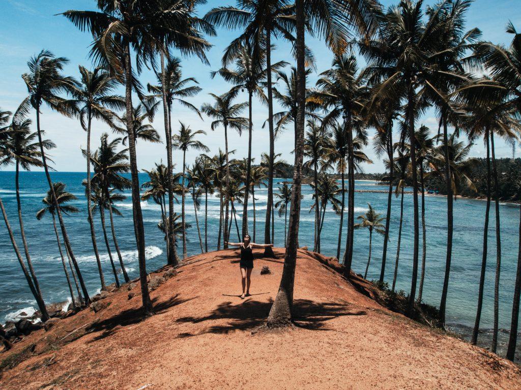 Marissa Palm Tree HIll