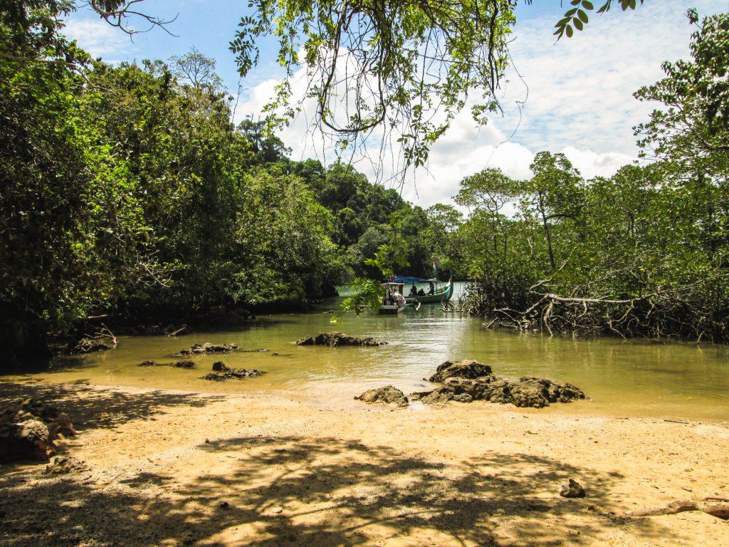 Sempu Island Mangrove, Indonesia
