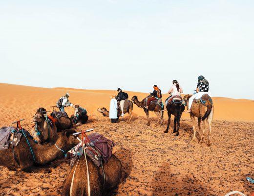 Camels Merzouga
