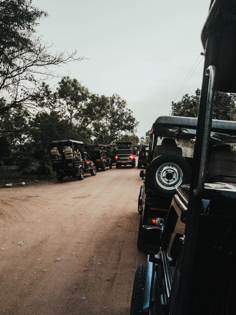 Jeeps lining up in Udawalawe