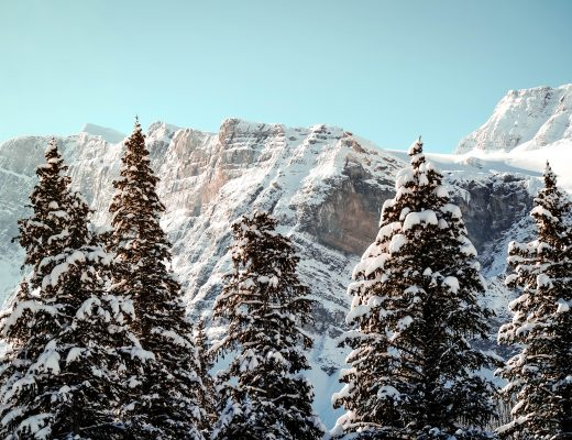 Snowy trees, Canada