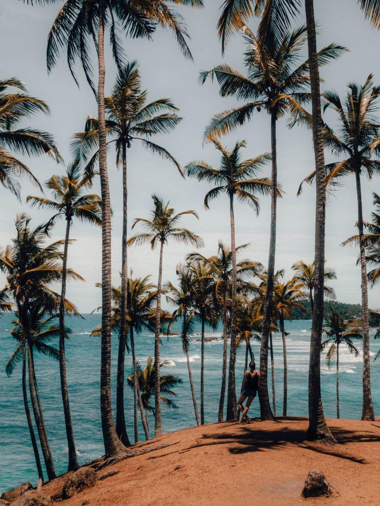 Palm Tree Hill, Mirissa