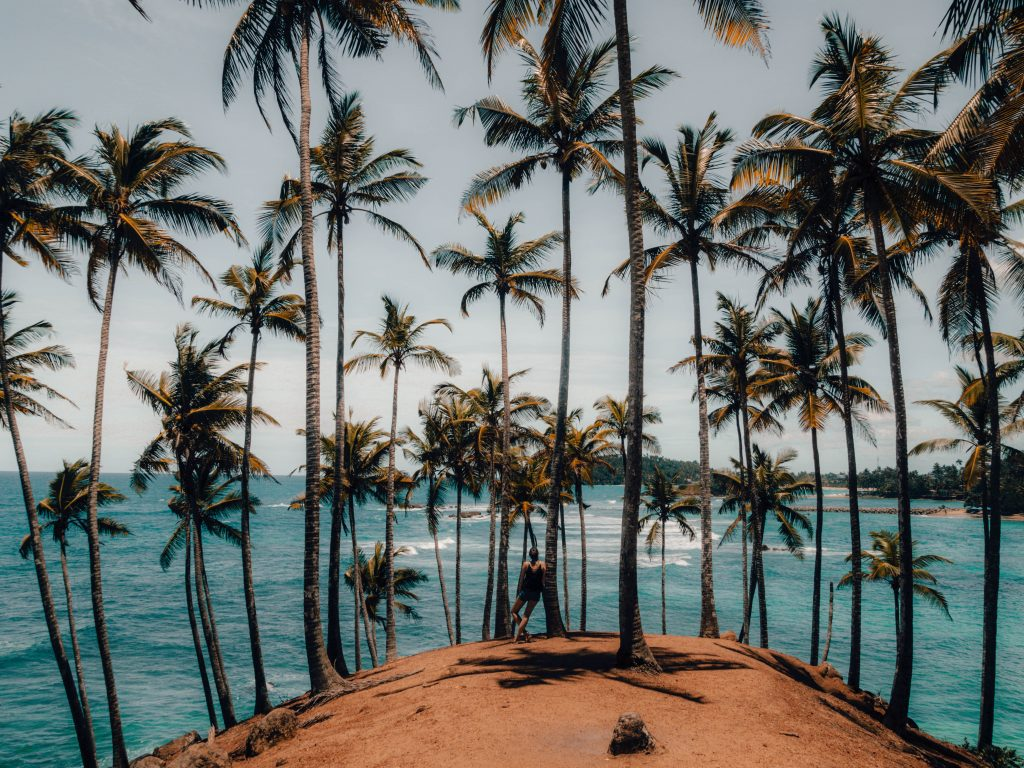Palm Tree Hill, Mirissa Travel Guide
