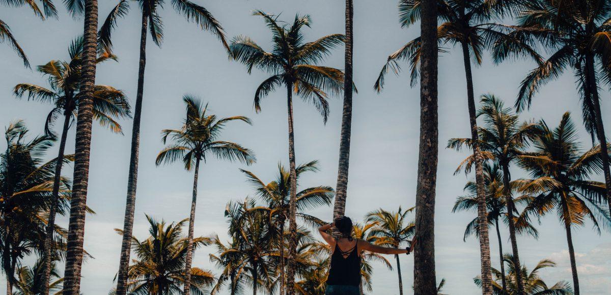 Palm Tree Hill in Mirissa