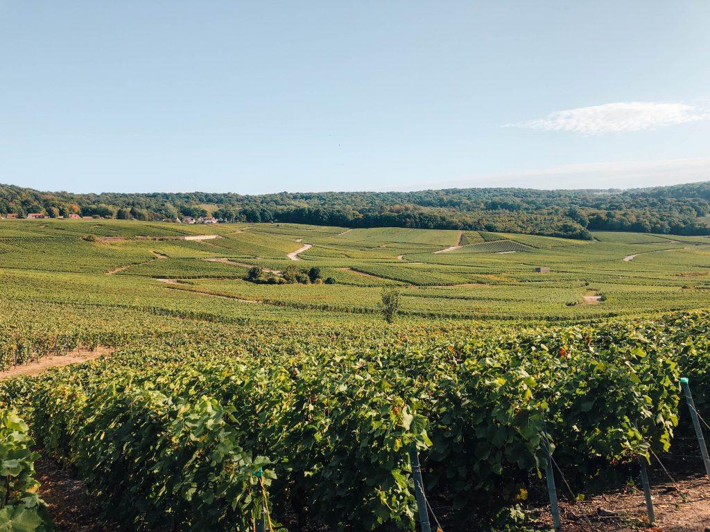 Champagne Fields in the Champagne Region