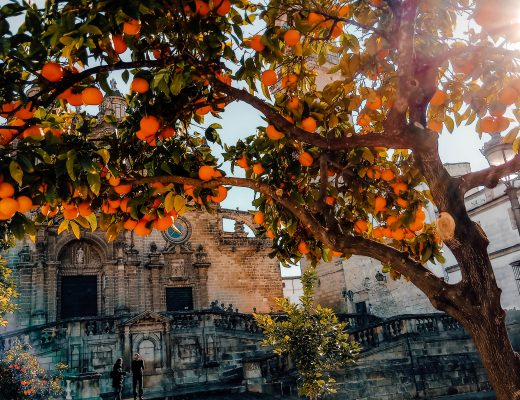 Cathedral and oranges in Jerez de la Frontera, Spain, part of Andalusia Itinerary