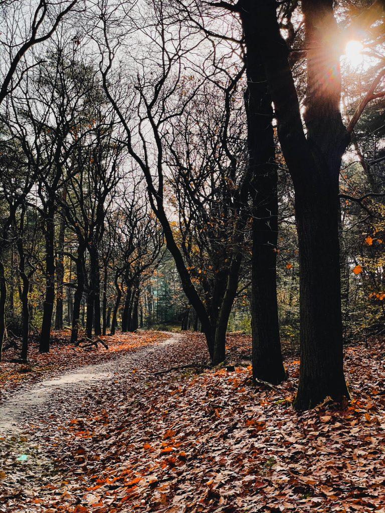 Hiking the Netherlands in Autumn, Utrecht