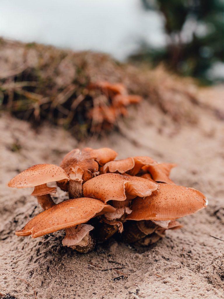 Mushrooms at Soesterduinen, Utrecht, Netherlands