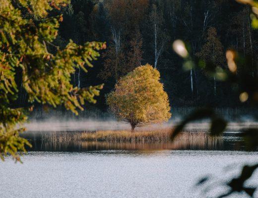 Dutch Lake Resort Campground, Wells Grey