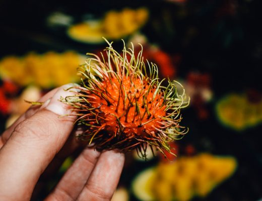 Fruit during the Bukit Lawang jungletrek