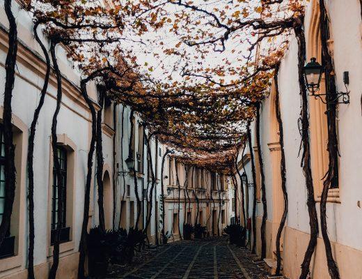 Jerez de la Frontera, Tio Pepe, Most beautiful street of the world, Andalusia, Spain