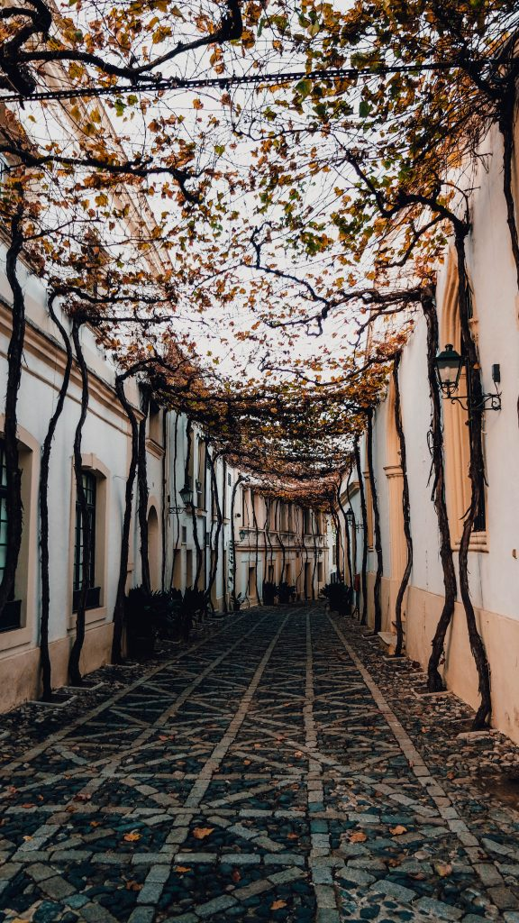 Jerez de la Frontera, Tio Pepe, Most beautiful street of the world, Andalusia, Spain